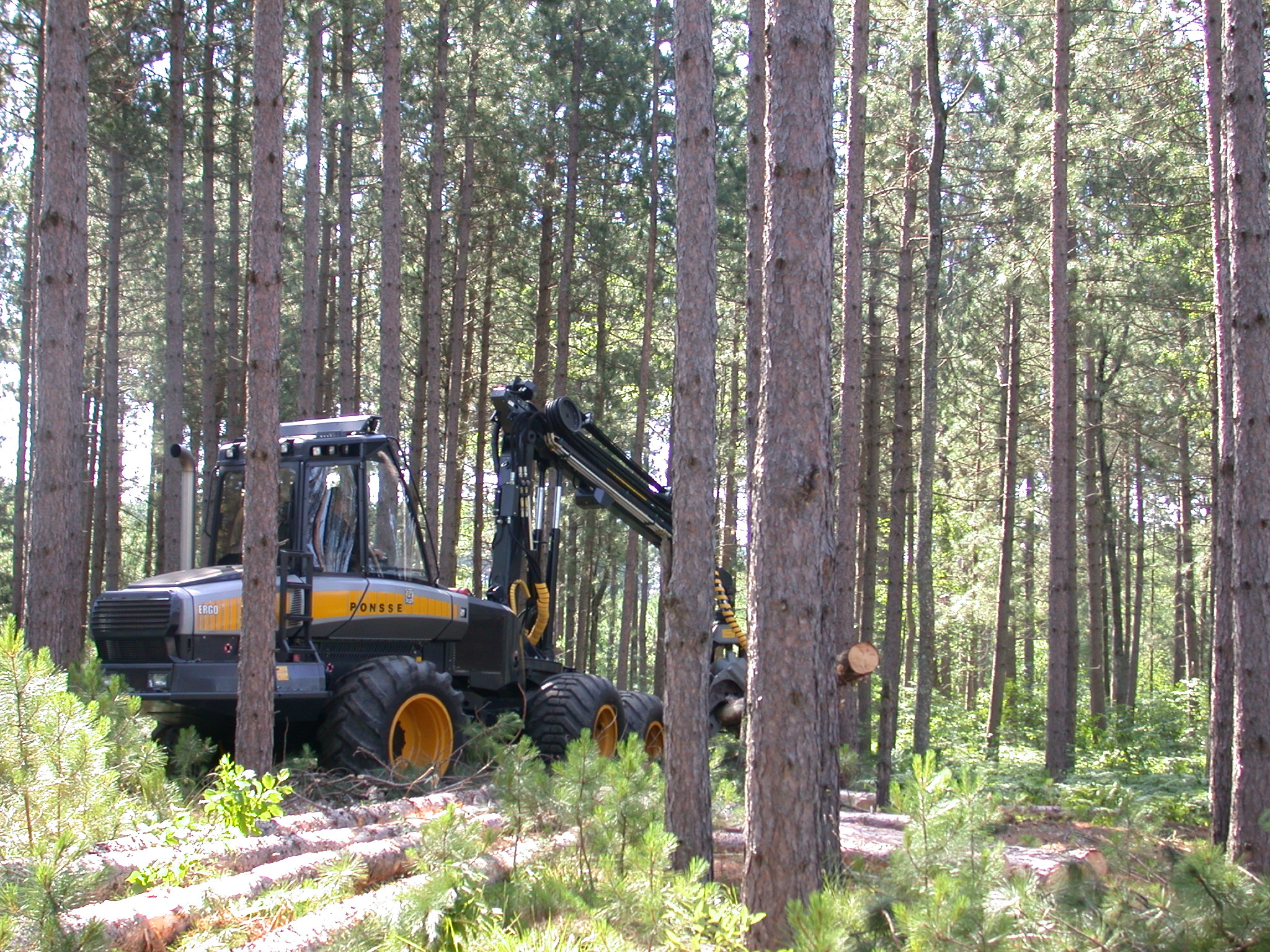 A picture of a logging machine working in a forested area.