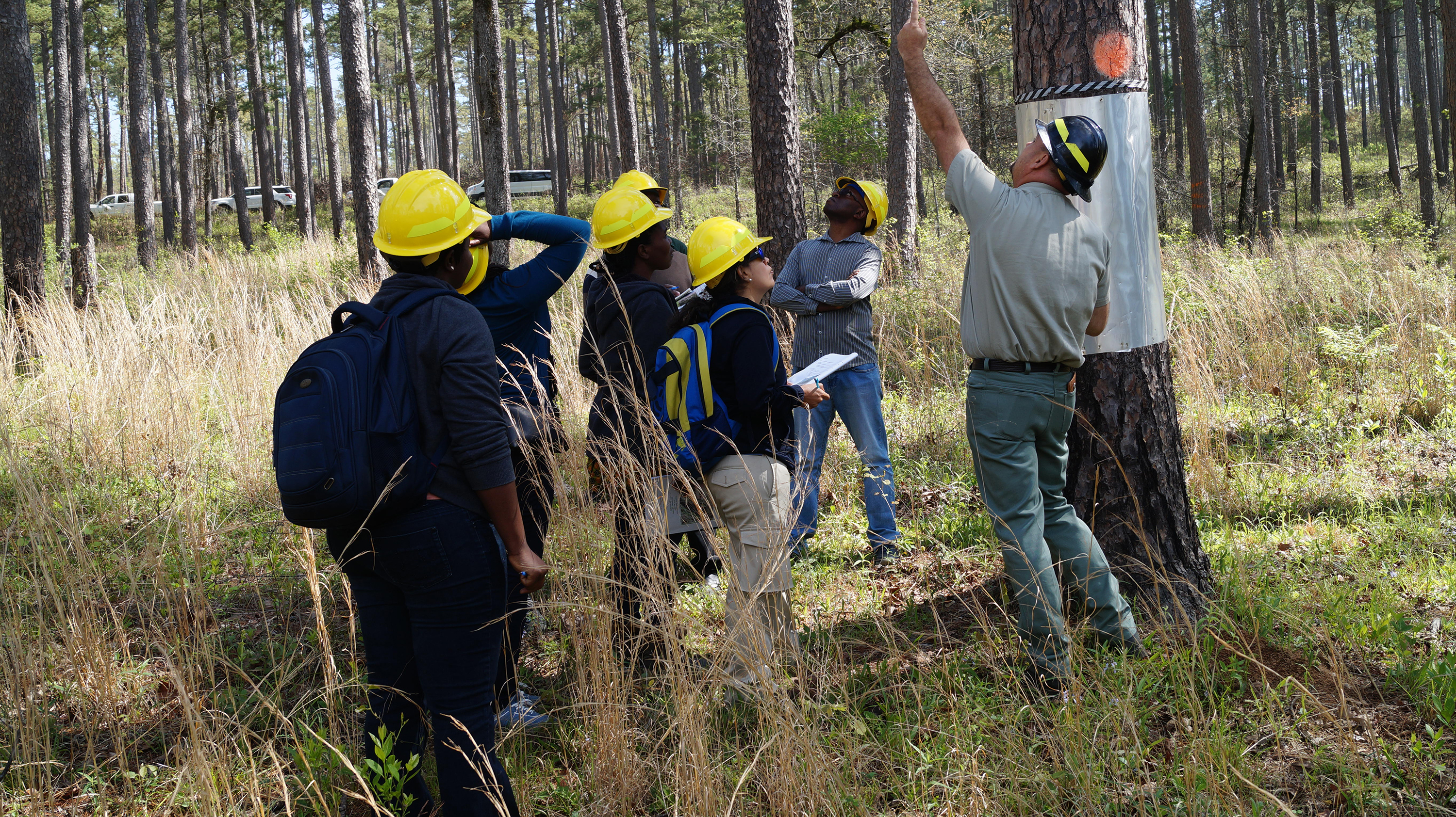 Fire managers from Columbia and Zambia learn about using fire to manage for wildlife species , such as the Red-cockaded woodpecker found on the Ouachita National Forest in Arkansas