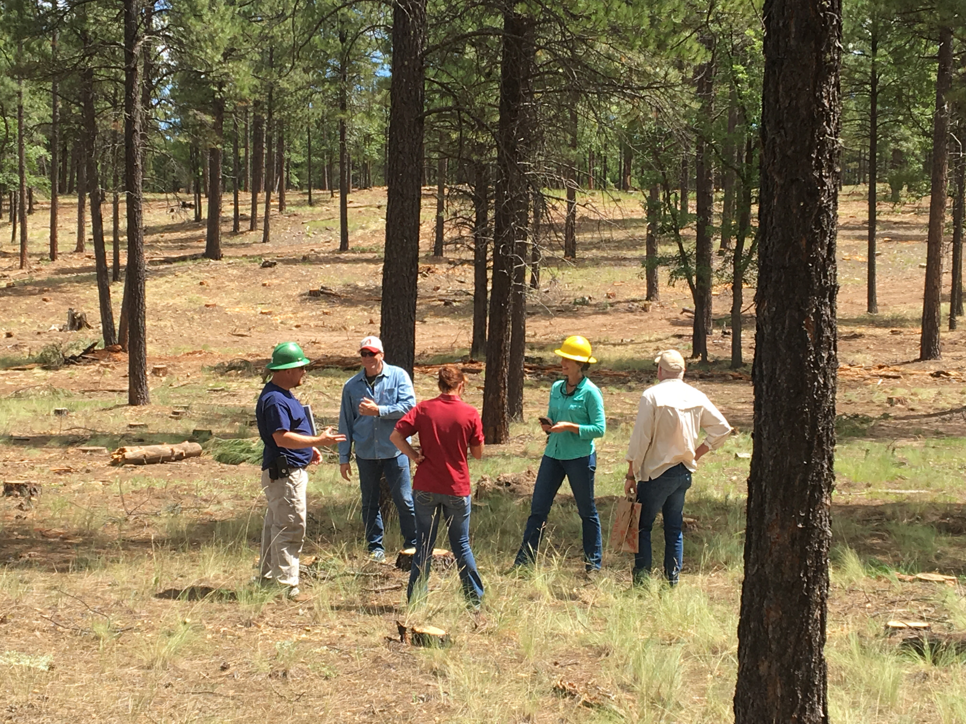A group of five foresters standing and talking out in a forested area.