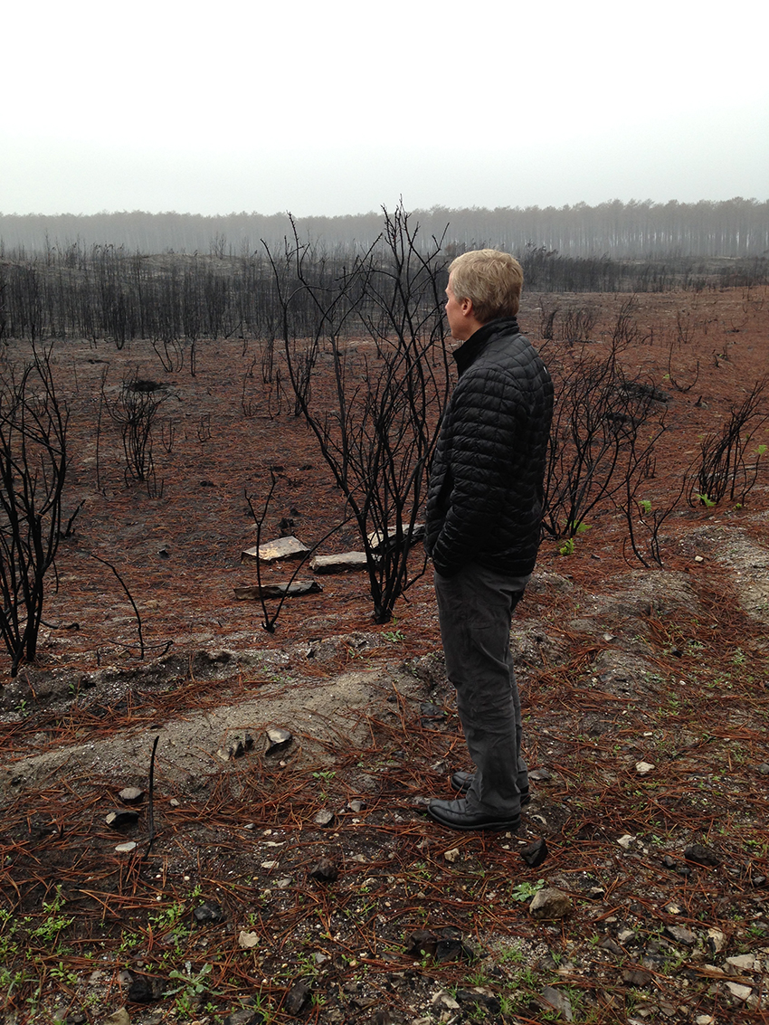 Photo: A man looks out over a forest burned by wildfire.