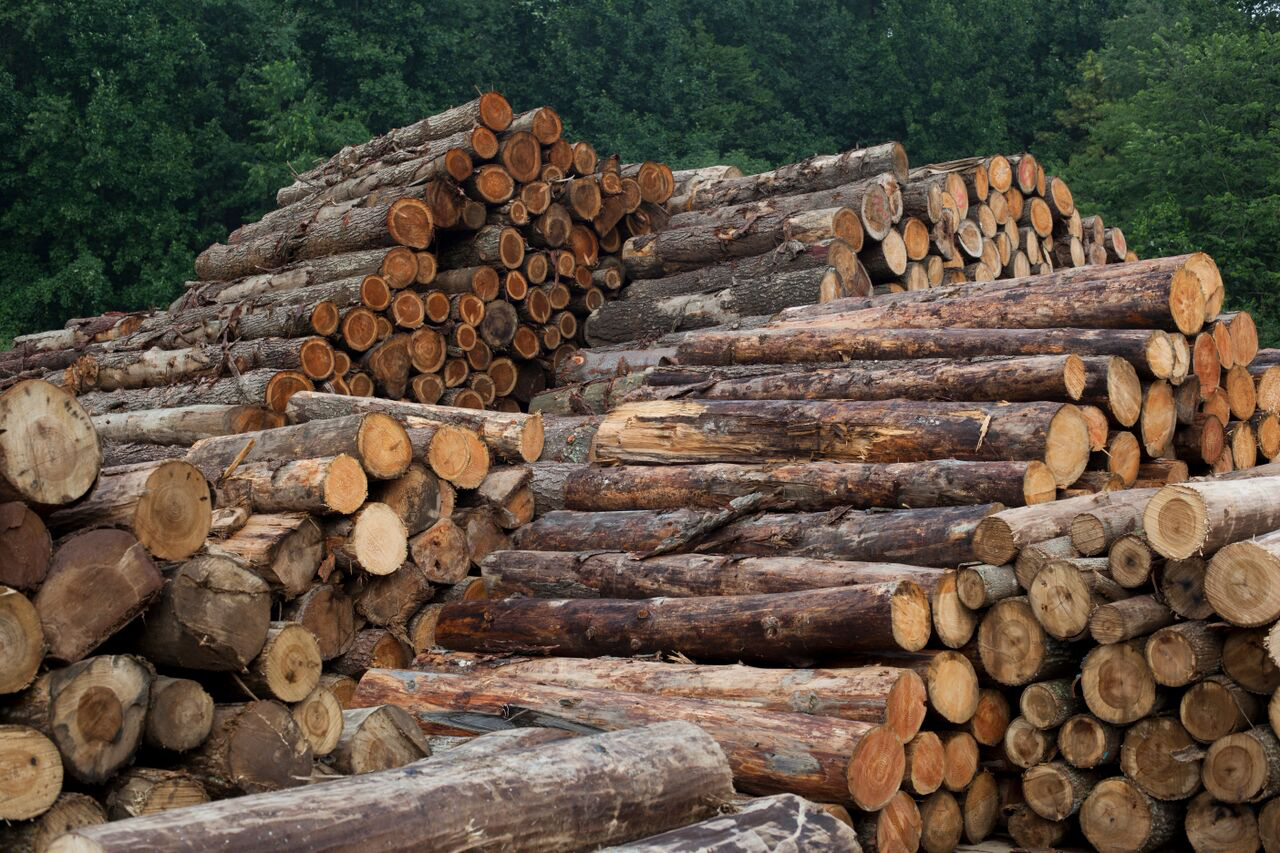 A photo of log timber products