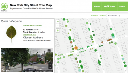 Volunteers Count Every Street Tree in New York City | US Forest Service