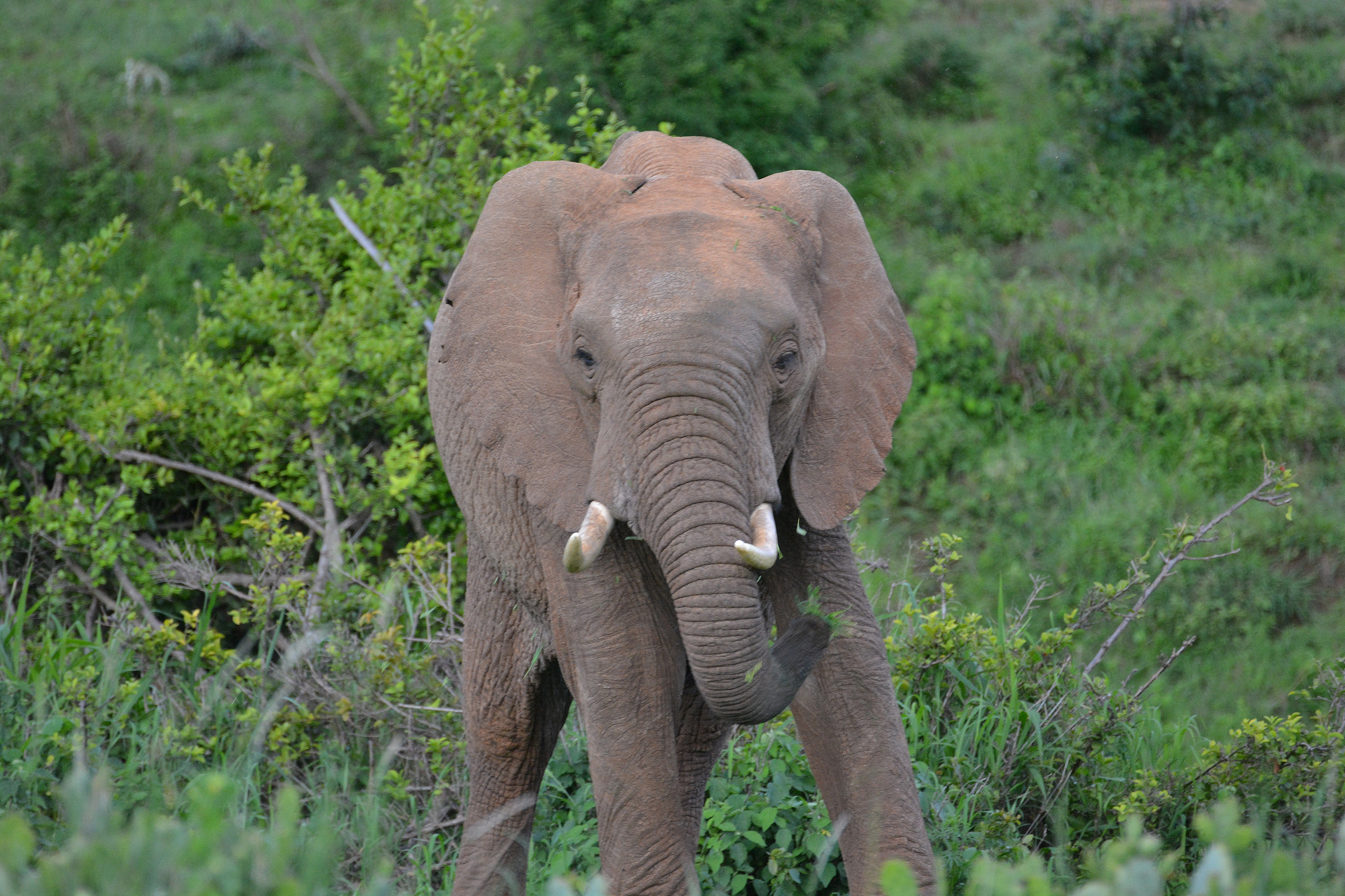 Photo: Elephant stands in national park in Kenya.