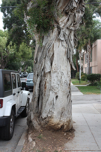 A photo of a large tree in a neighborhood sidewalk