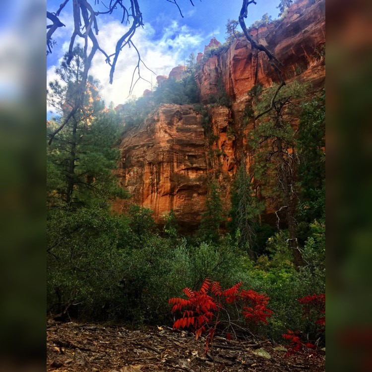 A photo of fall in a sedona canyon