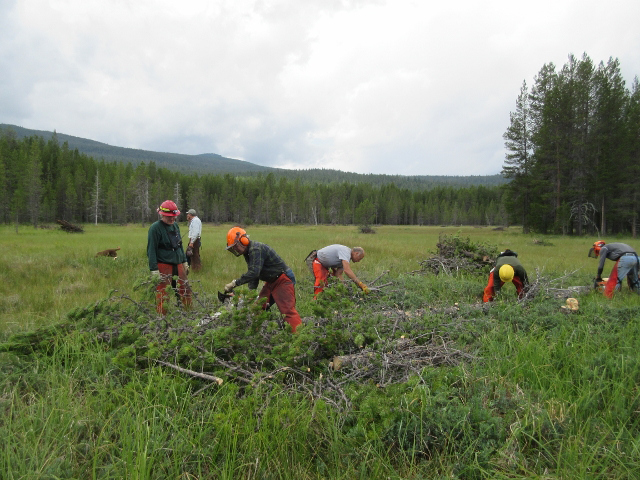 A photo of The Oregon Hunters Association Bend Association at work on a meadow restoration project
