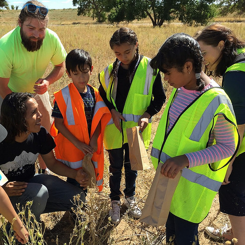 A photo of Metro Denver Nature Alliance partners collecting native seeds with Denver area fourth graders.