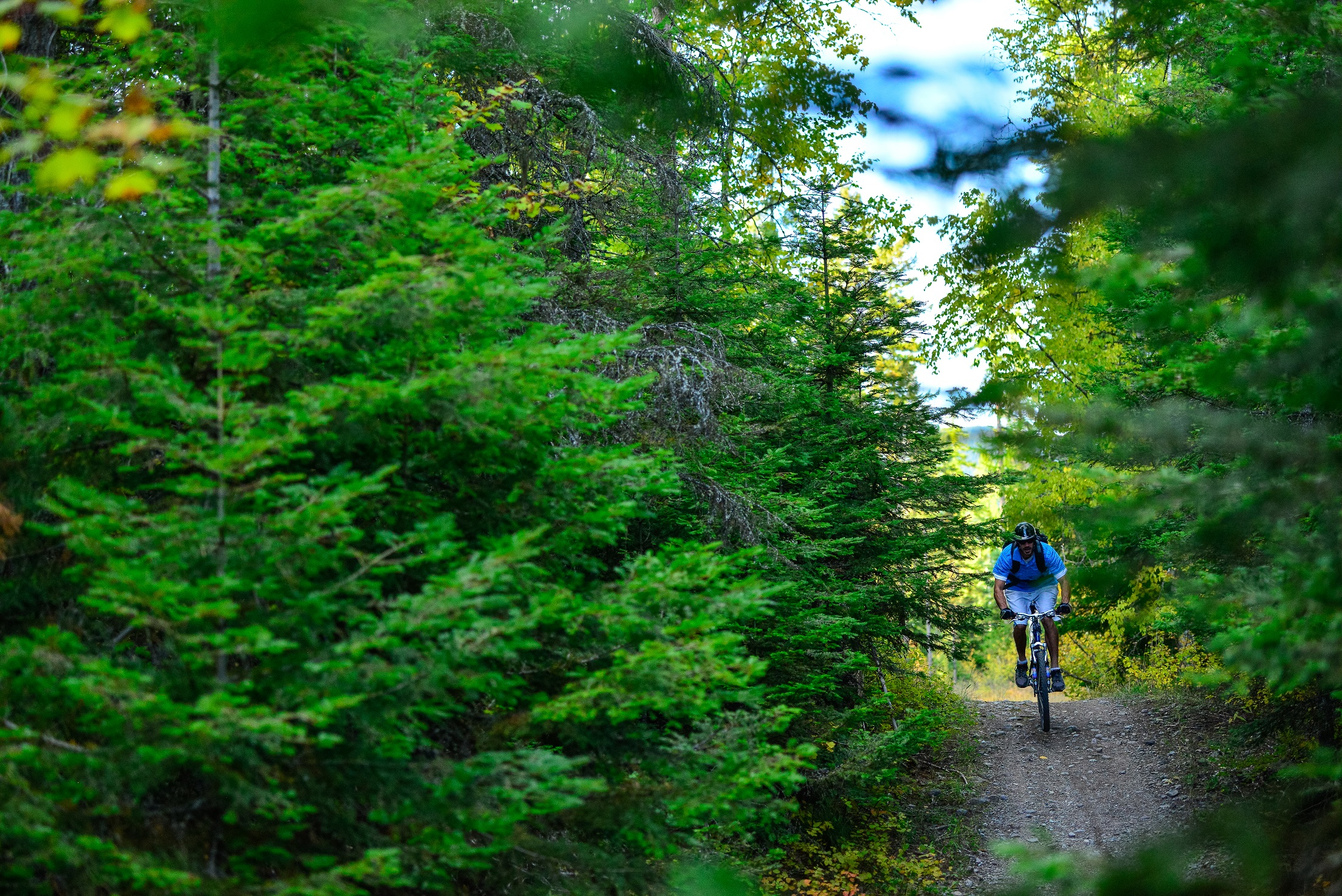 A picture of a mountain biker traveling down a forested trail, with lush green trees on either side.