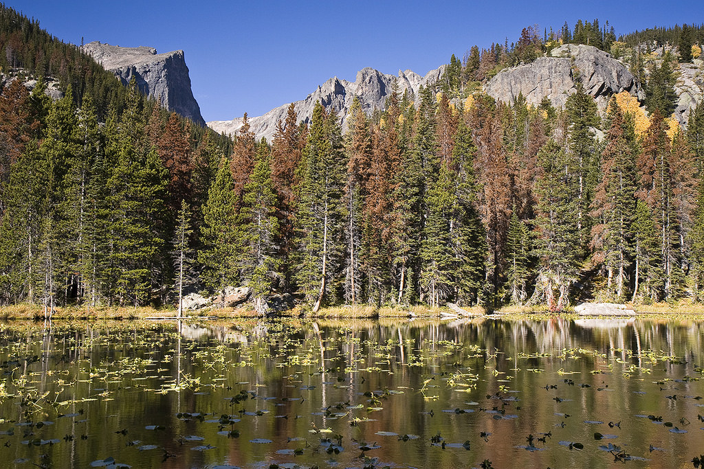 Mountain lake with forest damaged by pine beetles