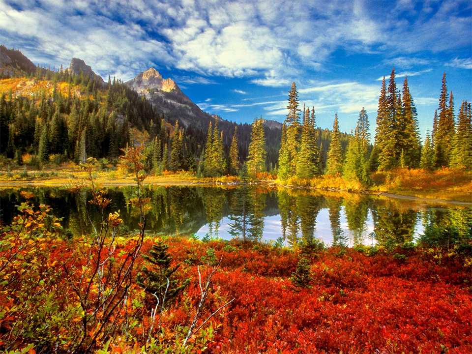 A photo of the The Olympic National Forest in fall.
