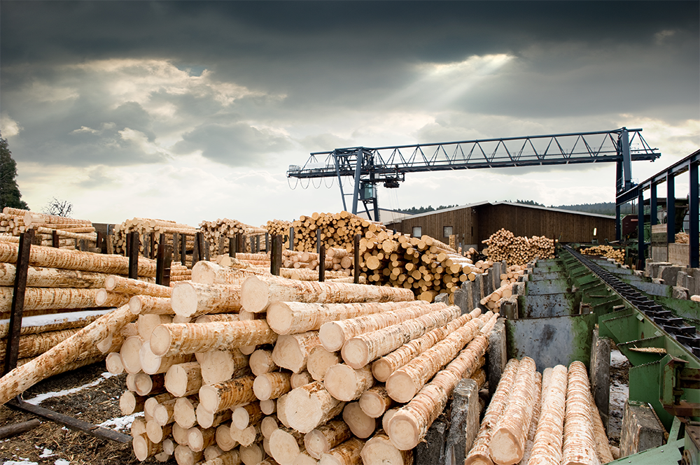 A photo of Logs stacked in rows before being cut into products