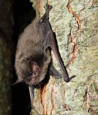 A photo of a bat on the side of a tree