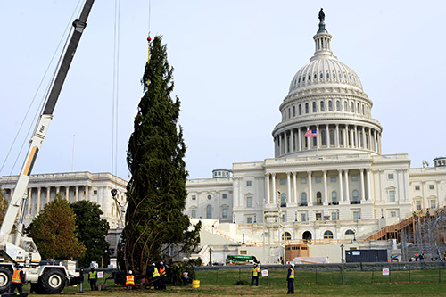 A photo of The giant Englemann Spruce is hoisted and put into place on the West Lawn of Capitol Hill.