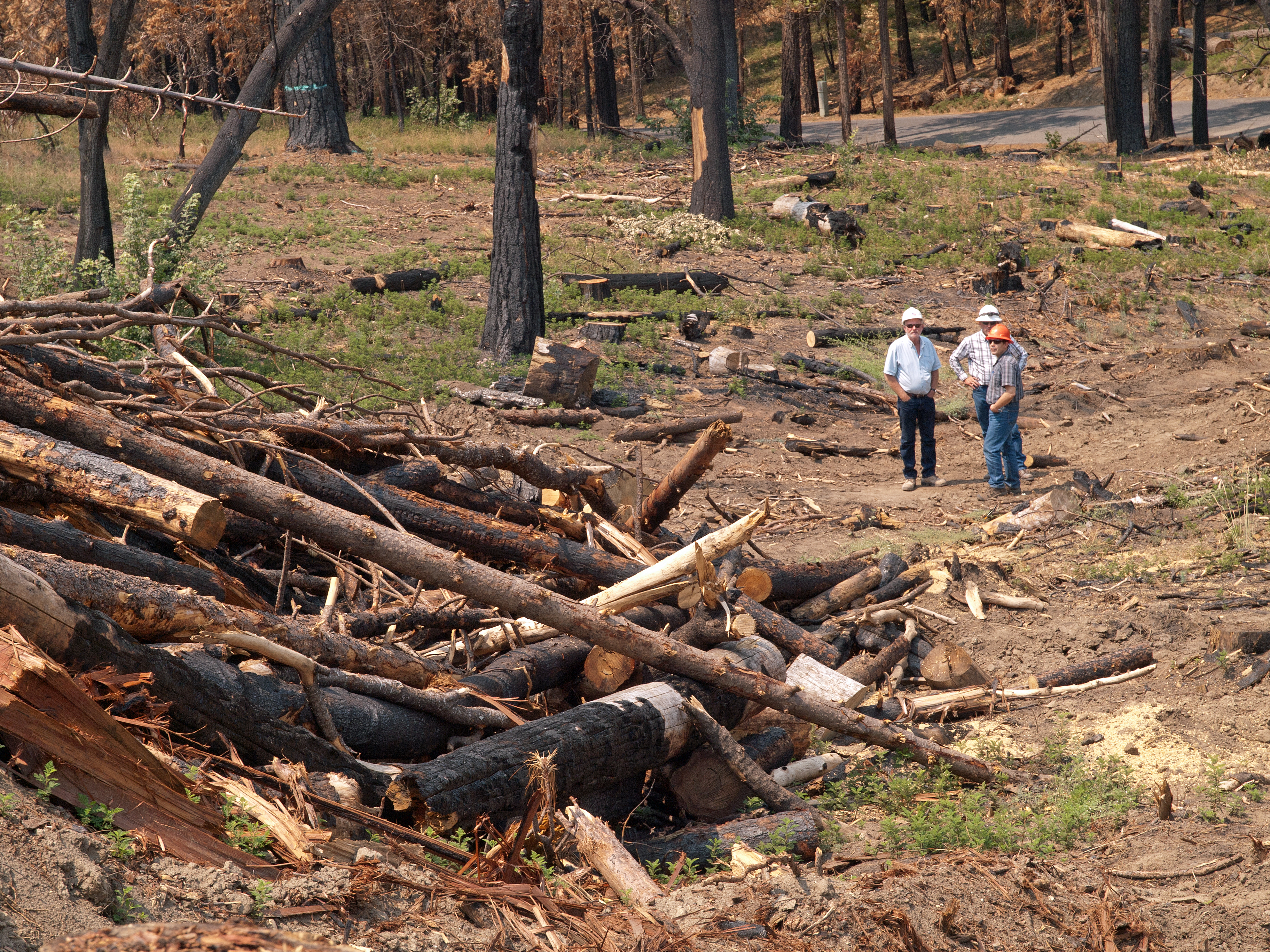 A picture of three members of a BAER team, wearing hard hats, looking over an area that has recently burned with trees and brush in a pile.