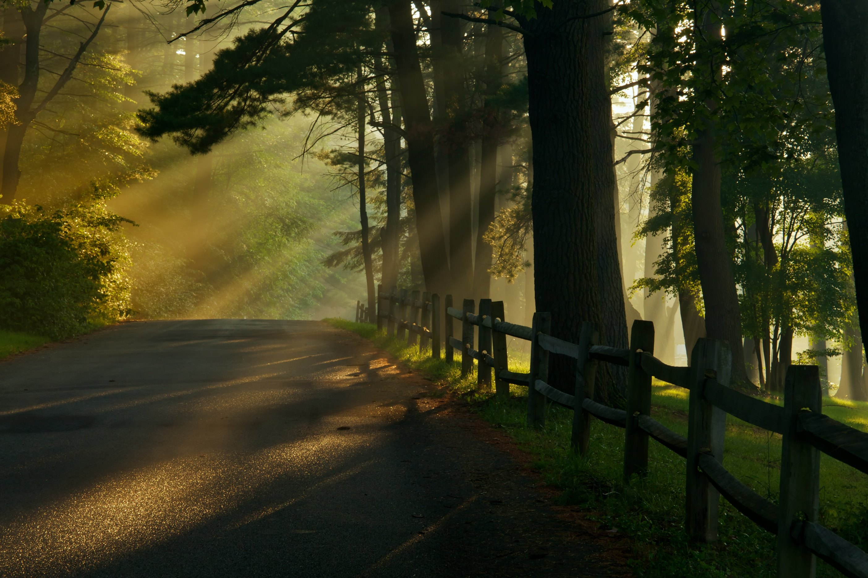 Sun streaming through trees along a road and wooden fence