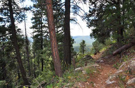 A side-hill trail in a forest setting, Tonto National Forest.
