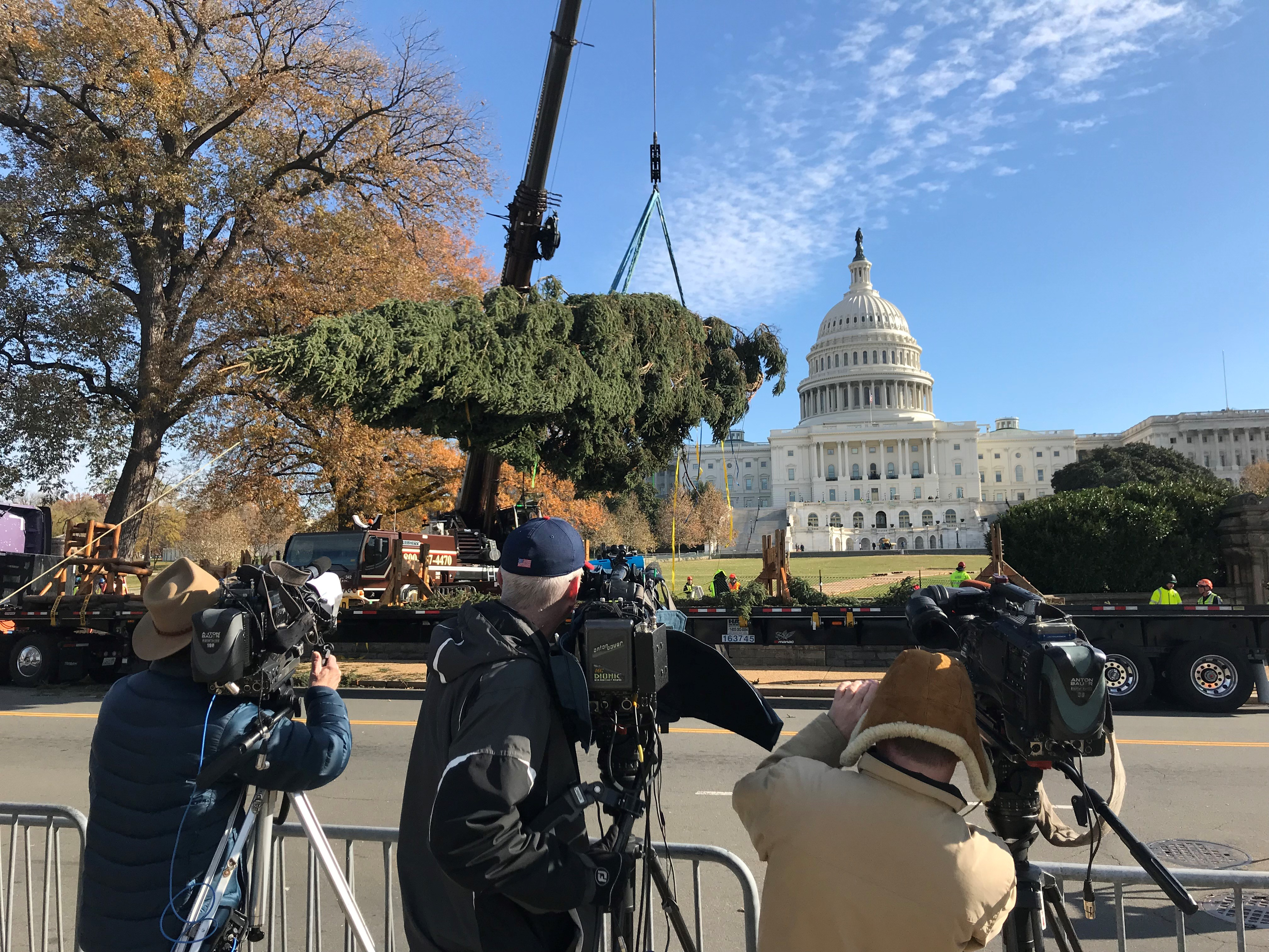 A picture of the Capitol Christmas Tree being lifted off the truck.