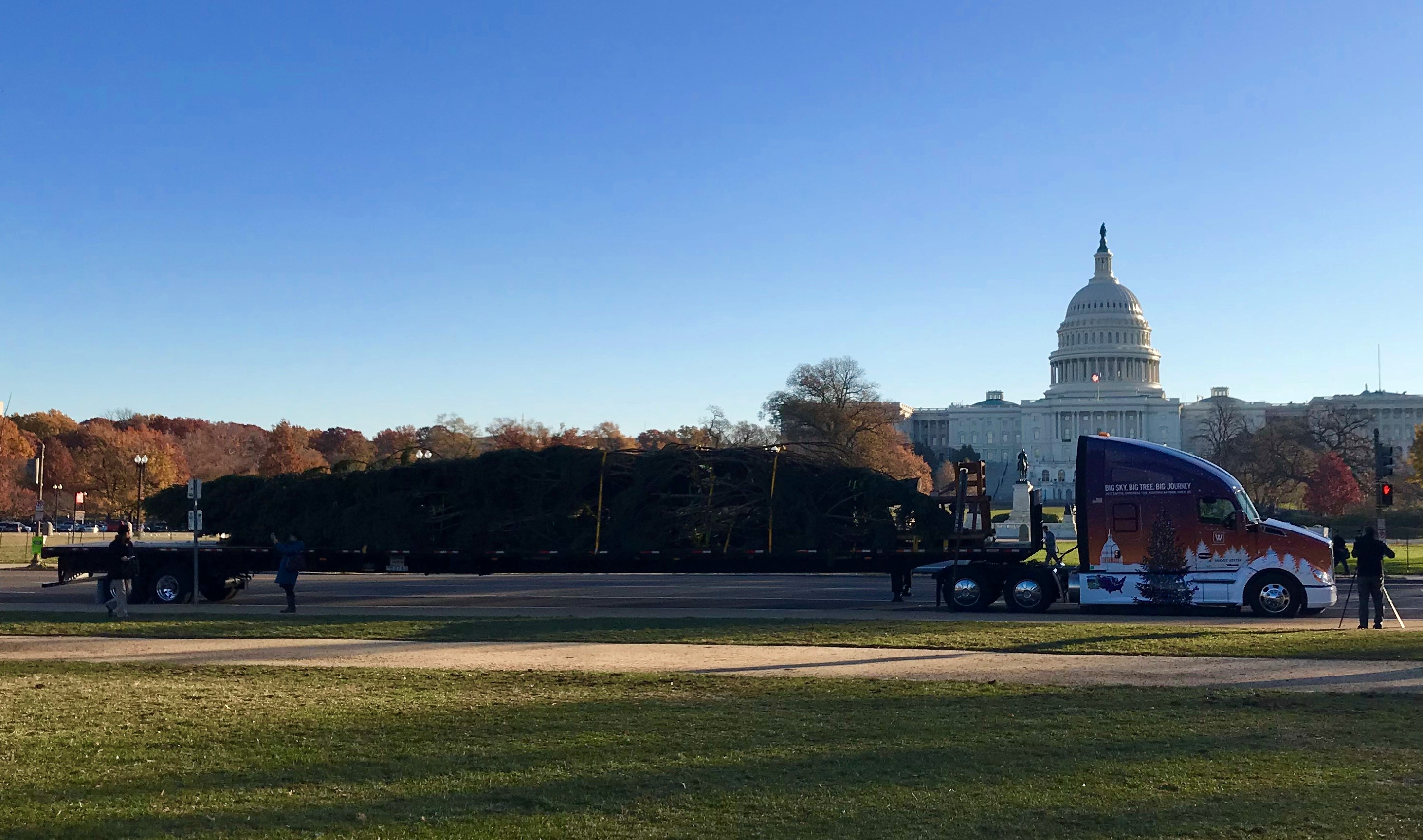 A picture of the Captiol Christmas Tree on the truck that delivered it from Montana.