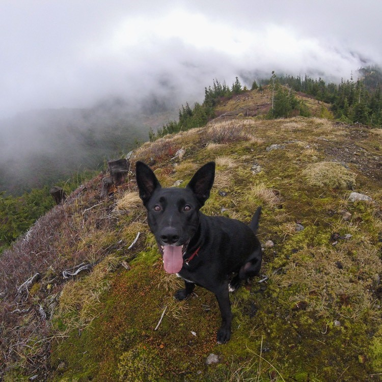 A photo of a dog near Hyak Tower in the Gold Creek area
