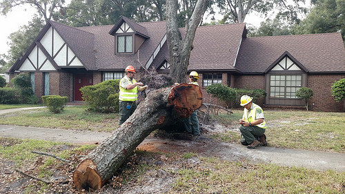 A photo of three Urban Forest Strike Team Members assess and record tree damage