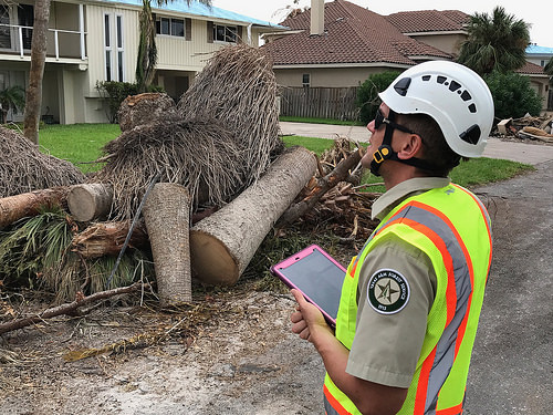 A photo of A member of the Urban Forest Strike Team surveys damage from Hurricane Harvey