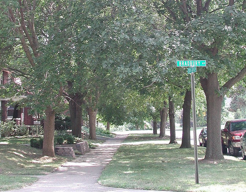 A photo of a neighborhood sidewalk lined with large trees
