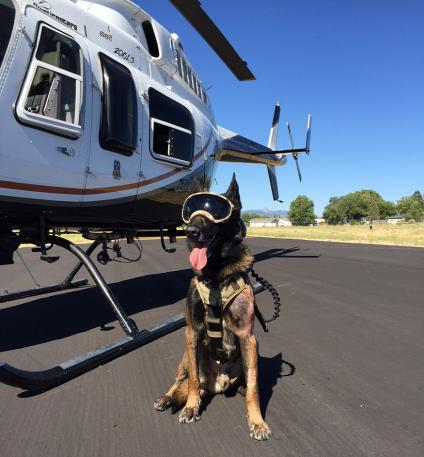 K-9 dog Ice poses for a glamour shot.