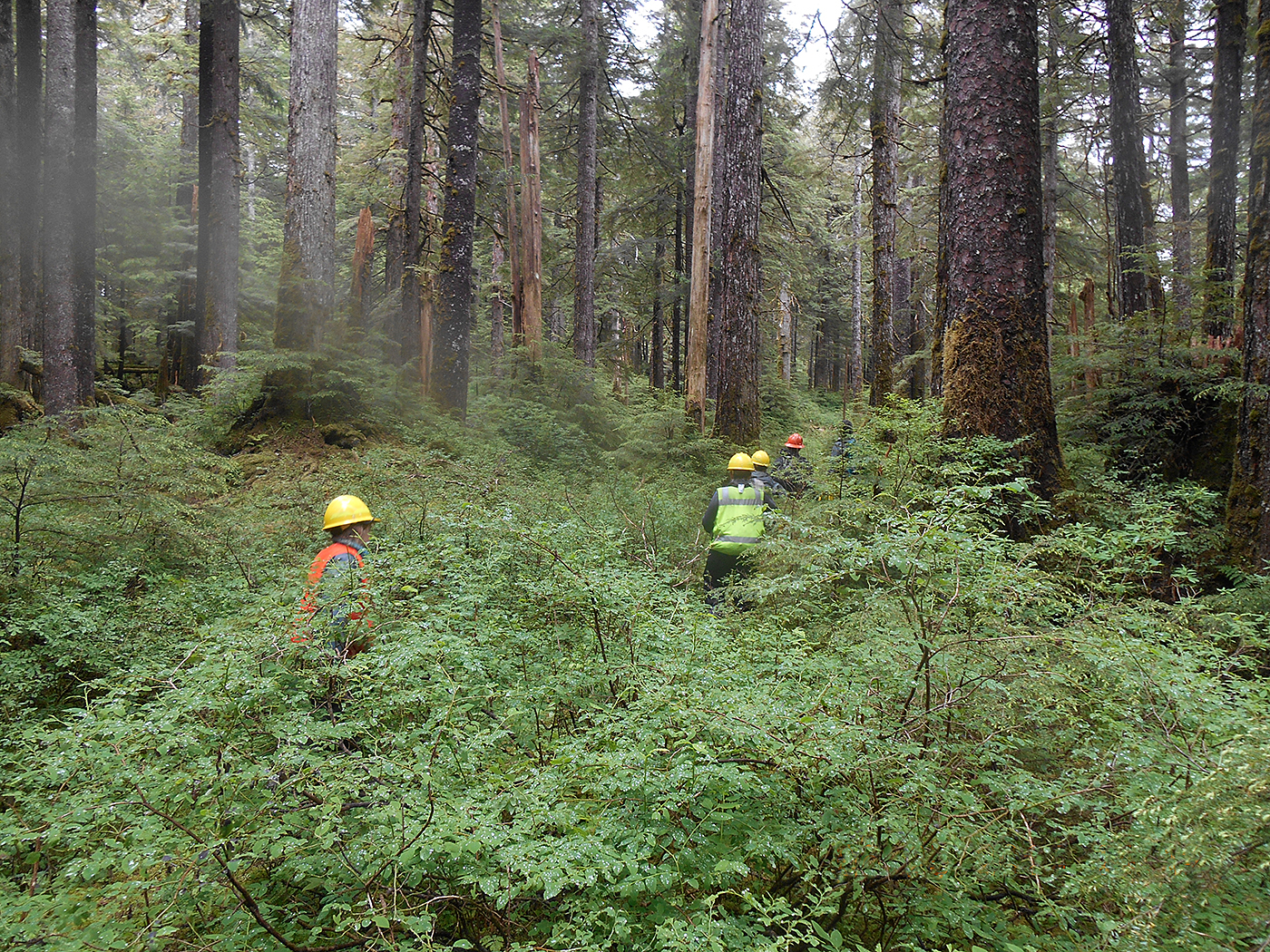 Photo: a line of people in brightly colored safety vests and hard hats walk through dense, lush forests.