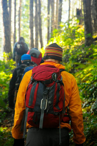 A photo of Volunteers walking the Olympic National Forest to monitor coastal martins.