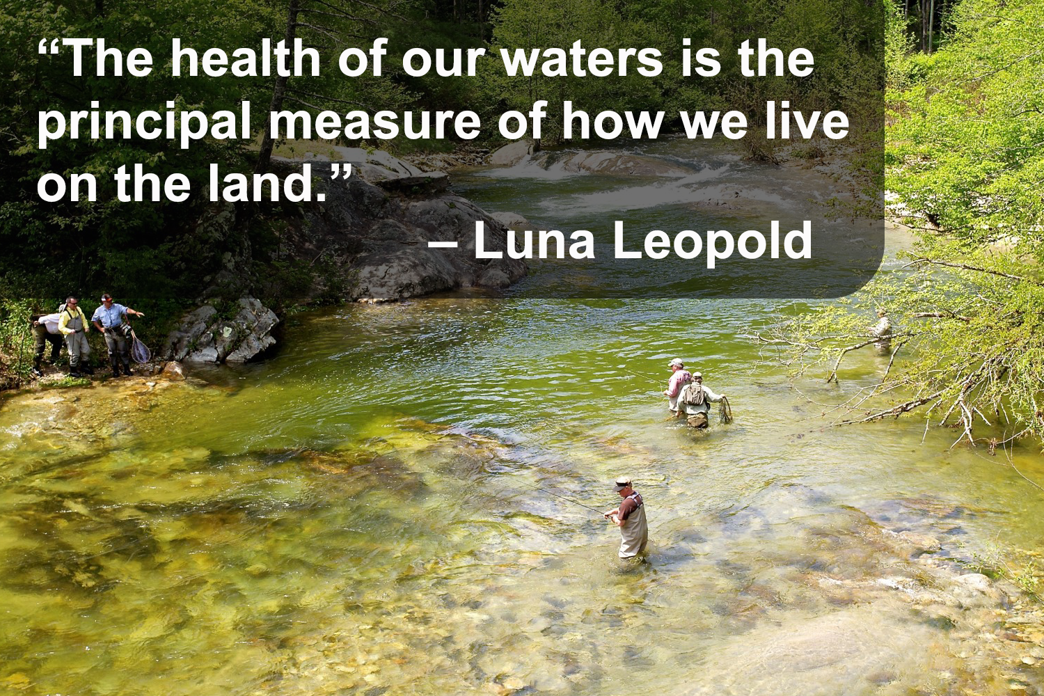 "A photo of Wilson creek, text that says ""The health of our waters is the principal measure of how we live on the land."" Luna Leopold"