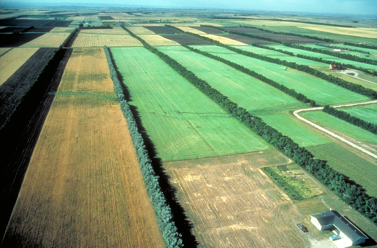 Field windbreak system helps control and manage snow to increase soil moisture. In the 1930s, the Prairie States Forestry Program planted over 18,600 miles of windbreaks in the Great Plains to address soil erosion during the Dust Bowl pe