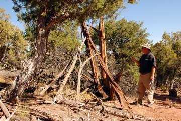 The remains of a free-standing wickiup is inspected in Mesa County, Colorado. Click on the photo to view an article on the Forest Service Blog webpage. (Photo courtesy Dominguez Archaeological Research Group)