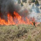 Firefighter with drip torch burning fuels near wildfire.
