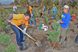 Volunteers work during a MillionTreesNYC fall planting day in New York City.