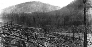 """Burned timber covers the landscape on Rainey Creek in Lolo National Forest, Mont., in the aftermath of the 1910 fires. Devastating fires that summer culminated in late August and would become known as the """"Big Blowup."""" (Courtesy ForestHistory.org)"""