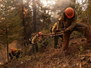 A photo of Roosevelt Hotshots digging out underbrush