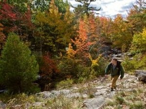 A hiker walks through a foliage of brown, yellow, and orange leaves.