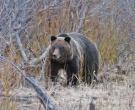 bear-test
