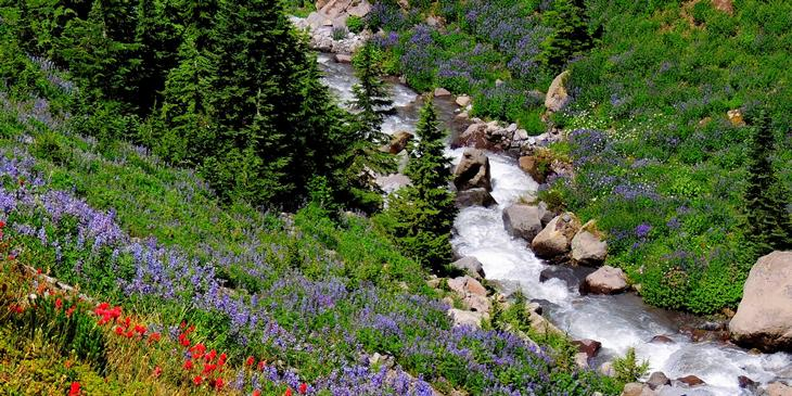 ative plants in bloom on Forest Service lands in the Pacific Northwest along a stream full of water.