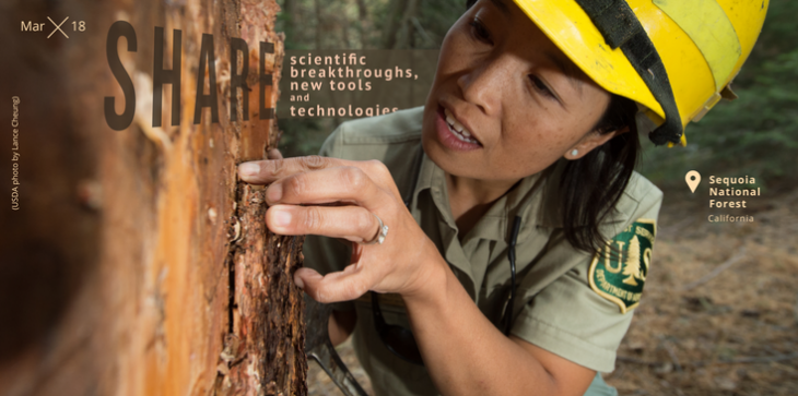 A picture of an employee inspecting an area on a tree, looking at the bark.