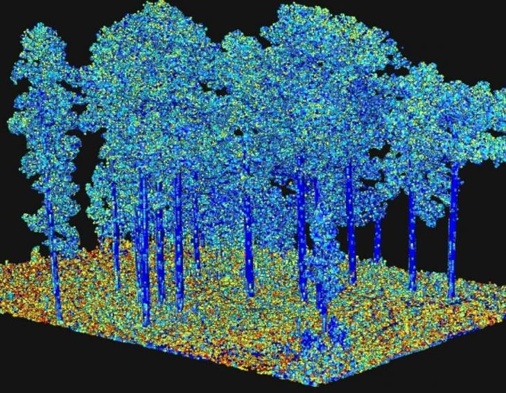 "A picture of output from processing of terrestrial laser scanning data, representing an important fuel characteristic ""surface area"" as illustrated by the different colors."
