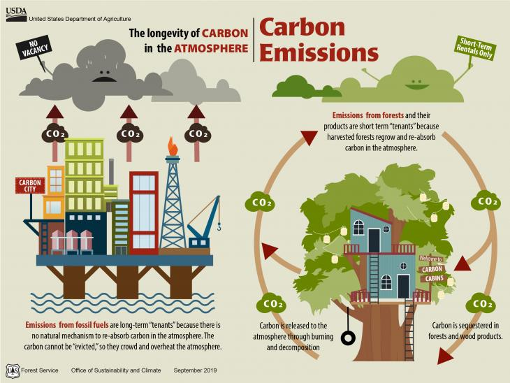 This graphic illustrates the open cycle of fossil fuel emissions to the atmosphere and the biogenic, closed loop of forest carbon in the atmosphere.