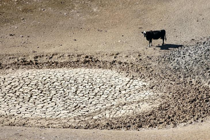 A cow in a dried up creek.