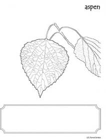 An illustration of Aspen leaf