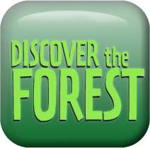 A square graphic that reads discover the forest