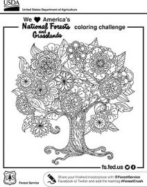An illustration of a coloring page with a tree