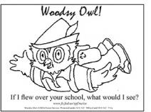 An illustration of Woodsy Owl fly over