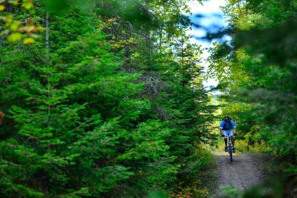 A picture of a mountain biker riding down a forested trail.