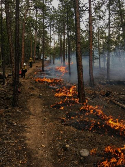 Two firefighters walk the forest grounds while fire burns slightly next to them as part of prescribed fire operations