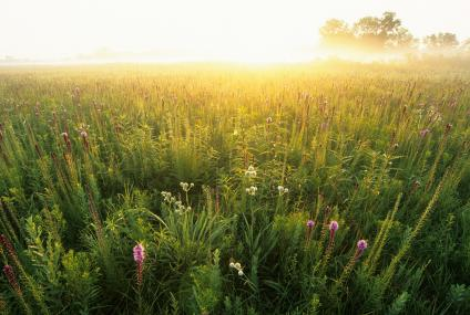 A picture of a sunrise on Midewin National Tallgrass Prairie perfectly illuminates beautiful wildflowers.